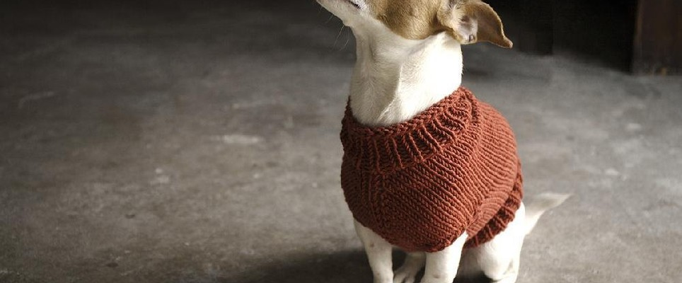 35b98f44937f Top 5 free dog sweater knitting patterns