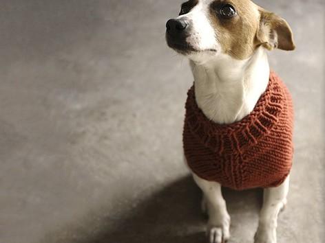 Top 5 Free Dog Sweater Knitting Patterns Loveknitting
