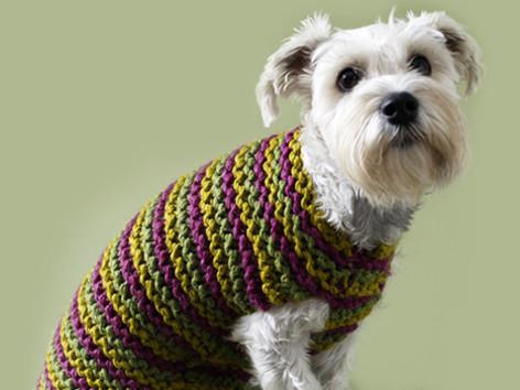 261269d63 Top 5 free dog sweater knitting patterns